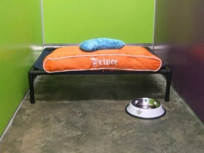 A dog kennel in the pet boarding section