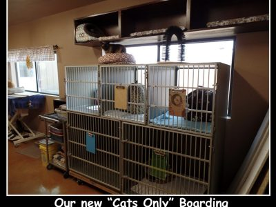 Cat boarding area with several kennels and cat beds
