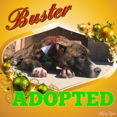 Buster-12