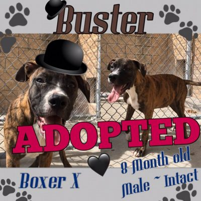 Buster-13