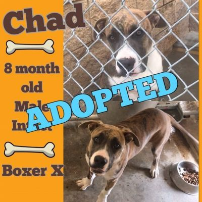 Chad-13