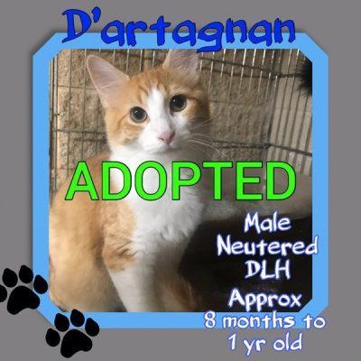 Dartagnan-1