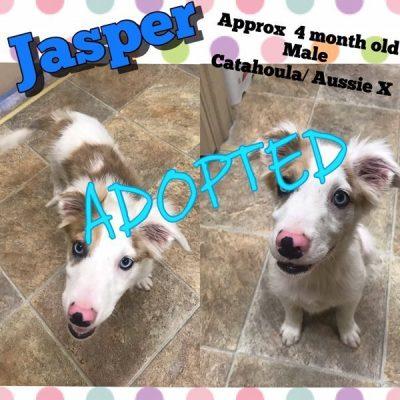 Jasper-Adopted-1