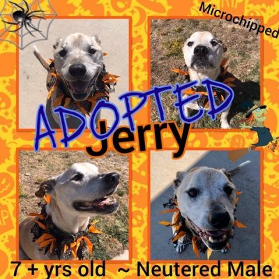 Jerry-Adopted-1-1