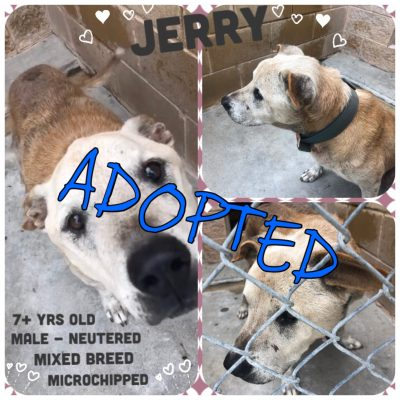 Jerry Adopted