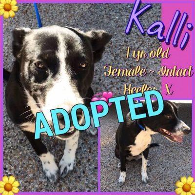 Kalli-3