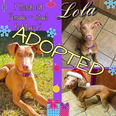 Lola - Adopted