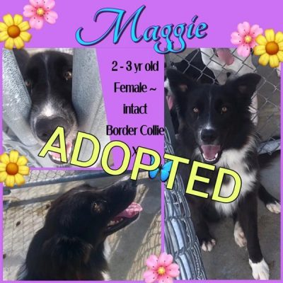 Maggie-1-1