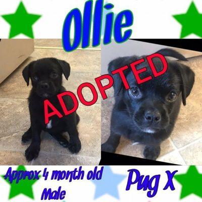 Ollie-1-1