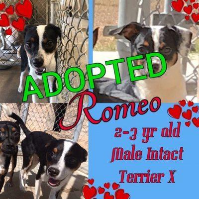 Romeo-2