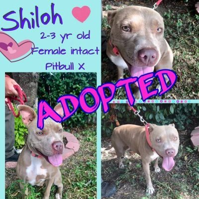 Shiloh-Adopted