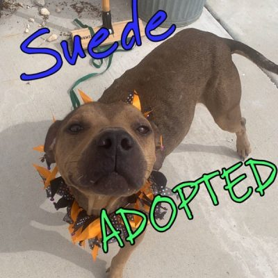 Suede-Adopted
