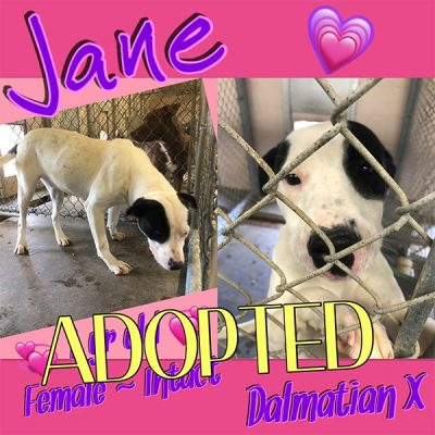 jane-adopted